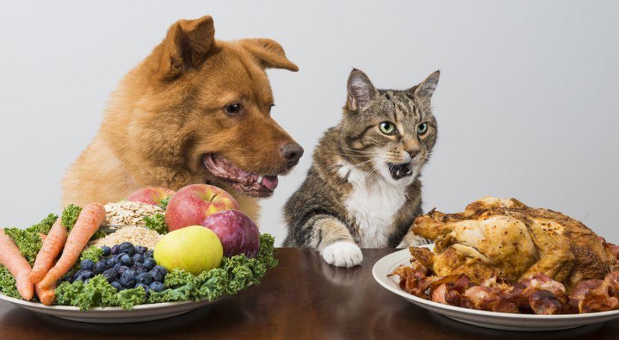 aliment pour animaux