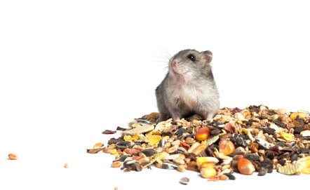 alimentation hamster