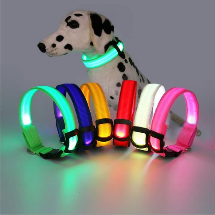 collier chien lumineux