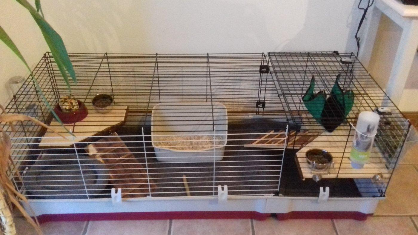grande cage cochon d inde