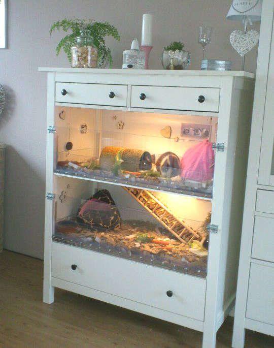 maison pour hamster