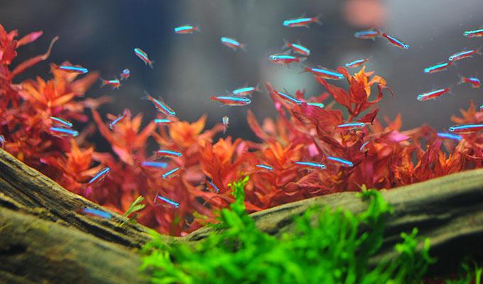 neon poisson