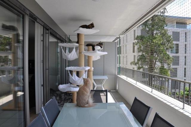 sécuriser balcon chat