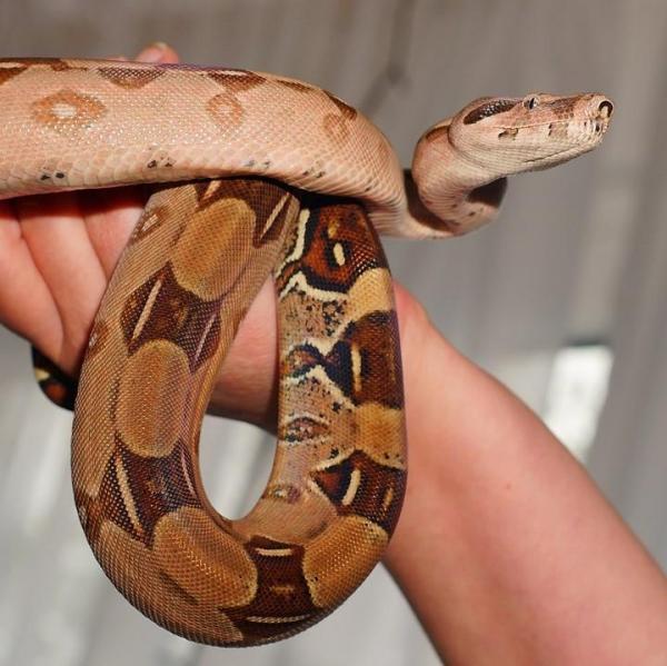 serpent compagnie