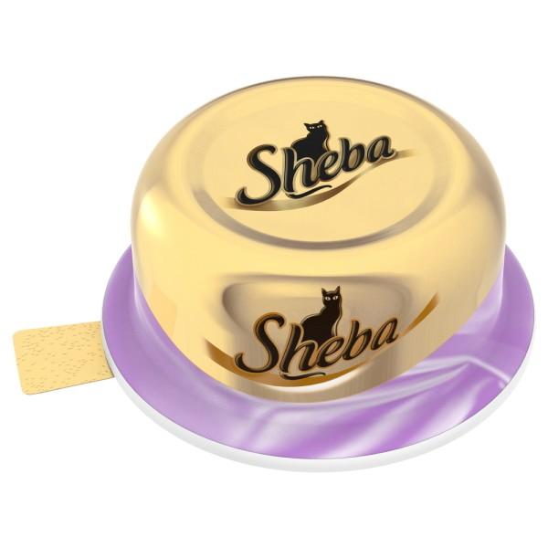 sheba chat