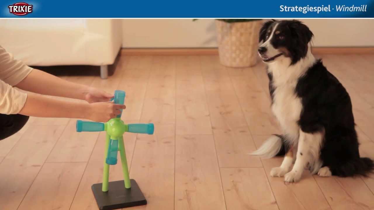 jeux educatif pour chien
